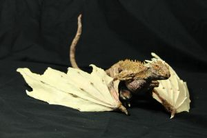 Dragon Hatchling Resin Kit 3 view 2 Viserion by RavendarkCreations