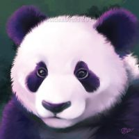 Purple Panda - SpeedPaint by GoldenDruid