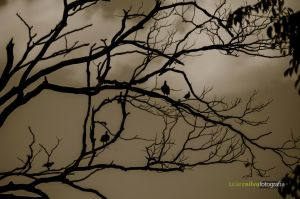 Birds on tree by lucianoW