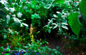 web by Heavendorr