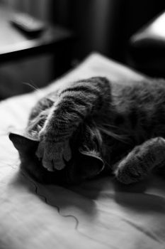 sleepy paws by narrowness