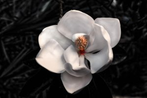 Study in White with Magnolia by AugenStudios