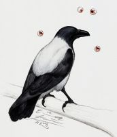 Four-Eyed Eyeless Crow by Paperiapina