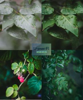 LP preset #1: Leaves by lenich123