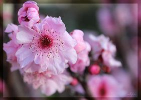 Shades of Spring by IgniteImagery