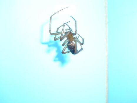 spider - Close Up by X-MENia
