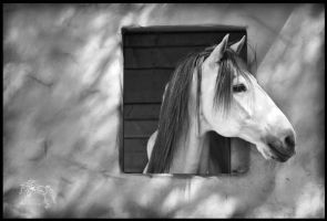 Window White Stallion by kvickrey