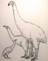 Inktober: Moa by CMIPalaeo