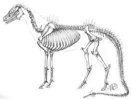 Anatomy of Domnopalus by Domnopalus