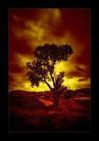 Fire Tree by mutos