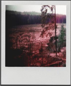 dead forest by LeaHenning