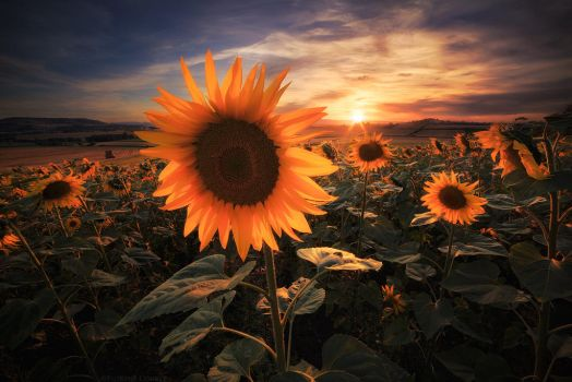 Summer Lord by FlorentCourty