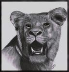 Old Lioness Drawing by AndyFairhurst