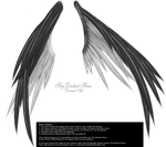 Wings of Madness - Black-White by Thy-Darkest-Hour