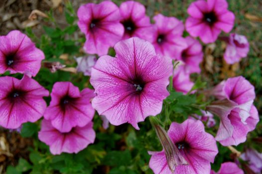 morning flowers 4 by lao