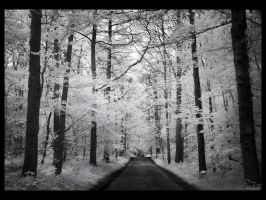 Never look back IR by caithness155