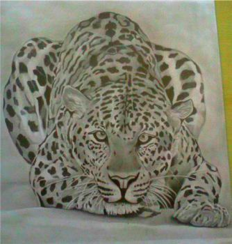 Leopard by Bang10