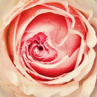 Rose essence by EliseEnchanted