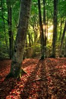 Shining Woods by FlorentCourty