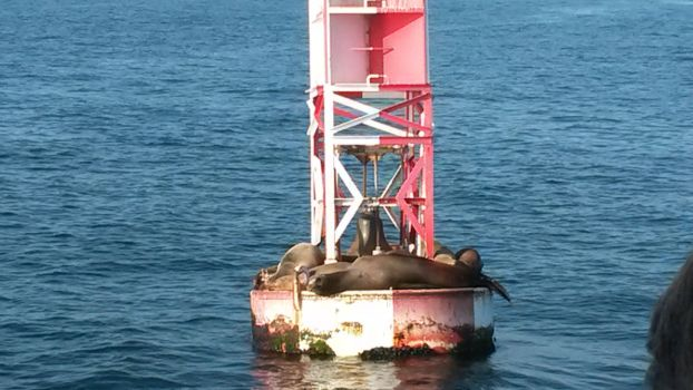 Sealions on bouy by DoctorQ2