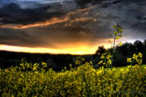 In the Evening by RickPatway