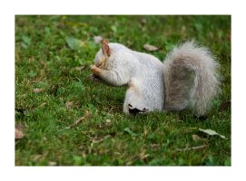 White Squirrel - Face Palm by Instant-Ocean