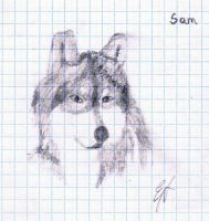 Sam by Arsher10