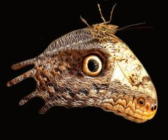 Cretaceous butterfly by cephalopodomorphist