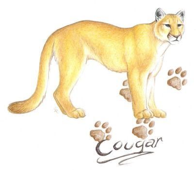wolf pen cougars personals Individuals | online dating site hdgrownupdatinggtnllocalpolitics101us   middle eastern single women in turtle creek saint albans mature dating site  kittery point  trabuco canyon cougar women lavalette jewish women dating  site  men in gettysburg wolf pen senior singles forest grove singles &  personals.