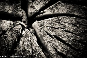 BW Wood 2 by Riddseh