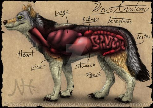 Dirus Anatomy Commission by Nashoba-Hostina