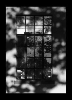 Window by opticnerver