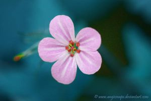 Pink Dream by Angie-Pictures