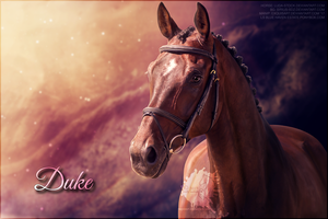 Duke by Ellessy