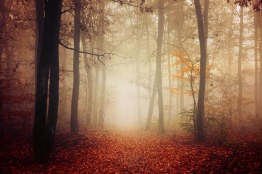 Autumn Walk LIX. by realityDream