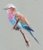 Lilac breasted roller by Kot-Filemon