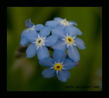 forget me not by morho