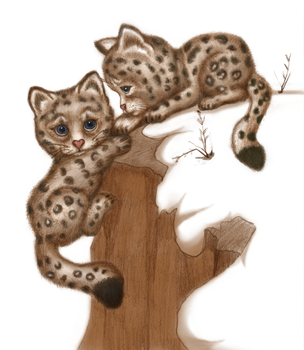 Snow Leopard Cubs by Ambsu