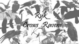 Ryk_Crows_Ravens brushes by Rykan