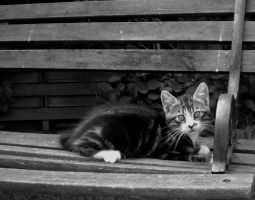 little cat on his bench by frimmi