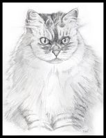 Charmaine the Cat by dedded