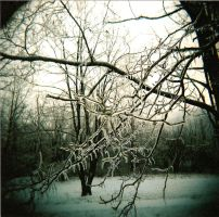 holga winter by rakastajatar