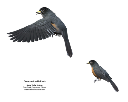 American Robins Free Stock png by madetobeunique