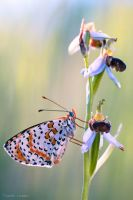 The butterfly and the orchid by Verdenwelt