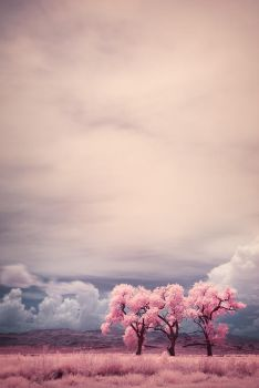 Three Trees In Infrared by Andross01