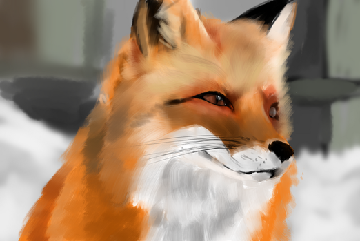 Fox by GinJuice