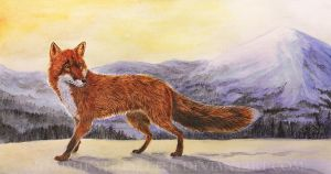 Fox watercolor study by Annushkathesetter