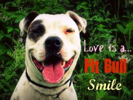 love is a....pit bull smile by kingstonrey
