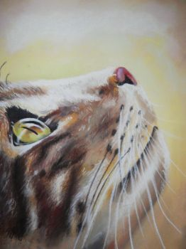 cat in pastel by nagogore