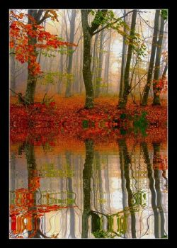 Foggy forest in the mirror by rahimyts